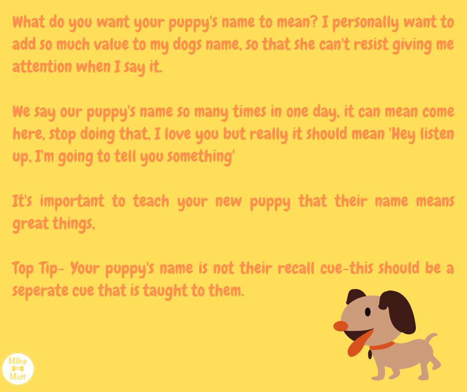 Puppy training How to teach puppy name