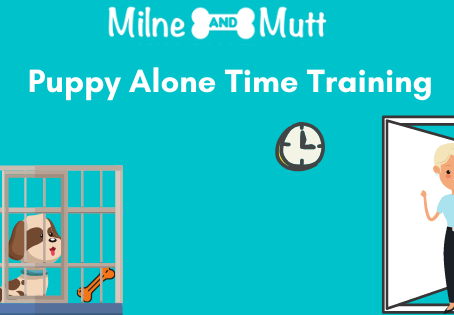 Puppy Alone Time Training