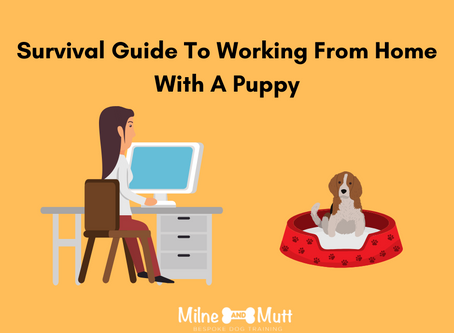 Survival Guide To Working From Home With A Puppy