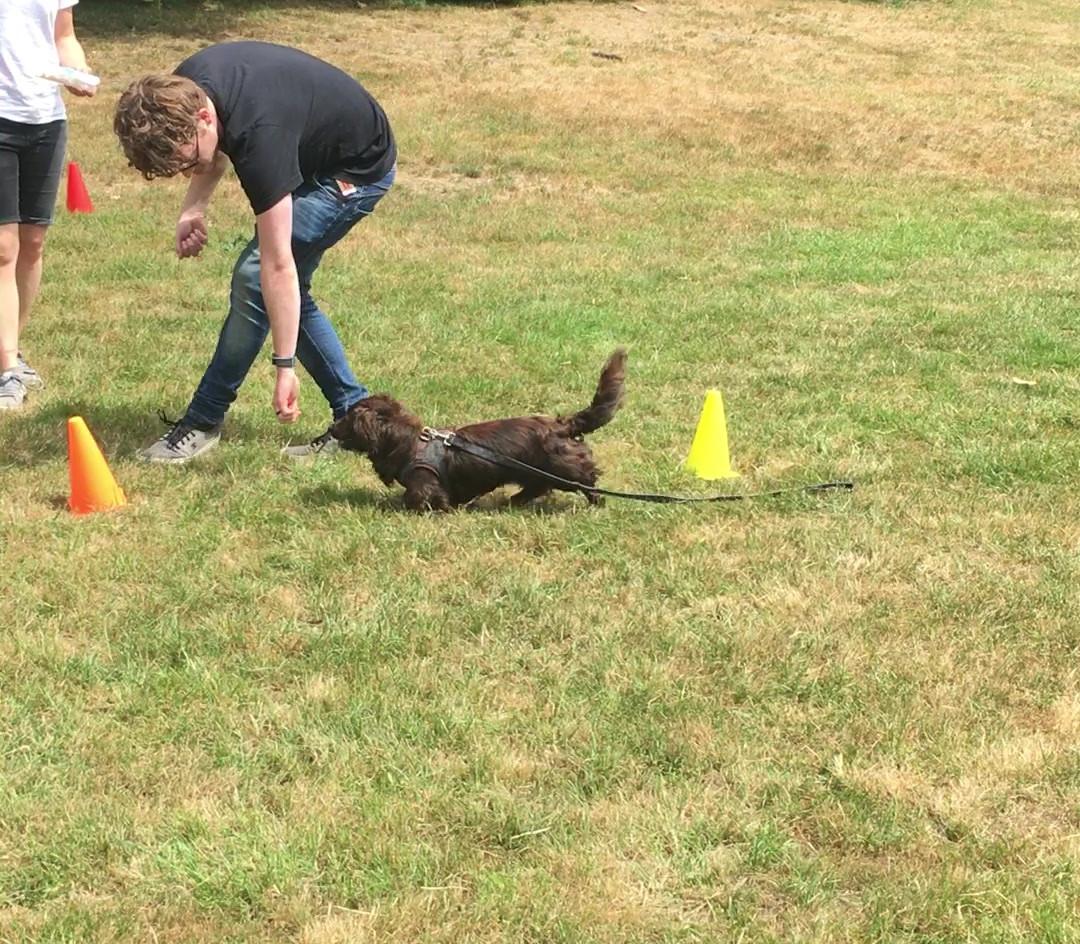 Dog Trainer/Social Walk