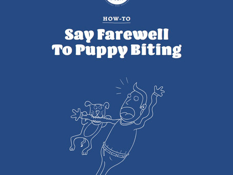 Say Farewell To Puppy Biting