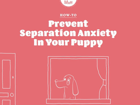 How To Prevent Separation Anxiety In Your Puppy