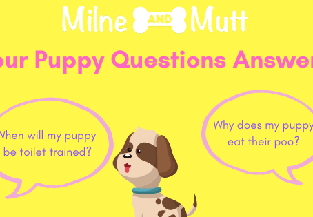 Your Puppy Questions Answered