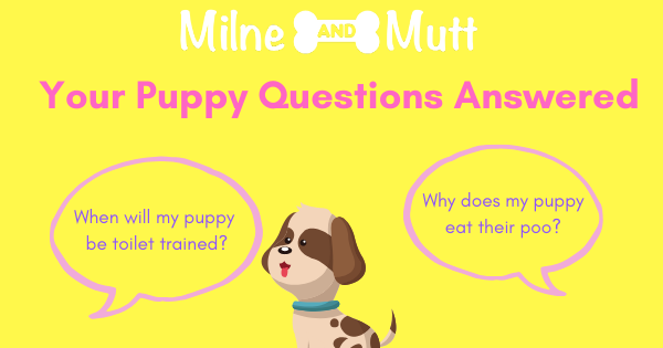 Common puppy questions.