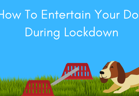 How To Entertain Your Dog During Lockdown