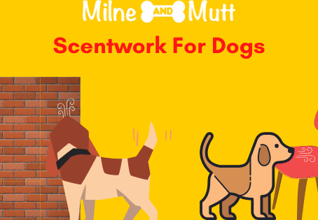 Scentwork For Dogs
