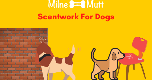Why is scent work so good for dogs? How to start scent work with your dog.