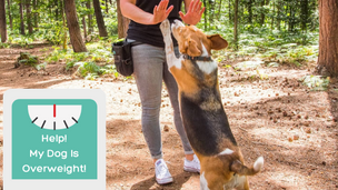 Help! My Dog Is Overweight! Luna's Weightloss Journey