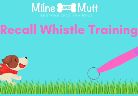 Recall Whistle Training