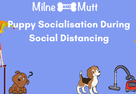 Puppy Socialisation During Social Distancing