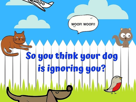 So You Think Your Dog Is Ignoring You?