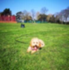 Training Walk Puppy.jpg