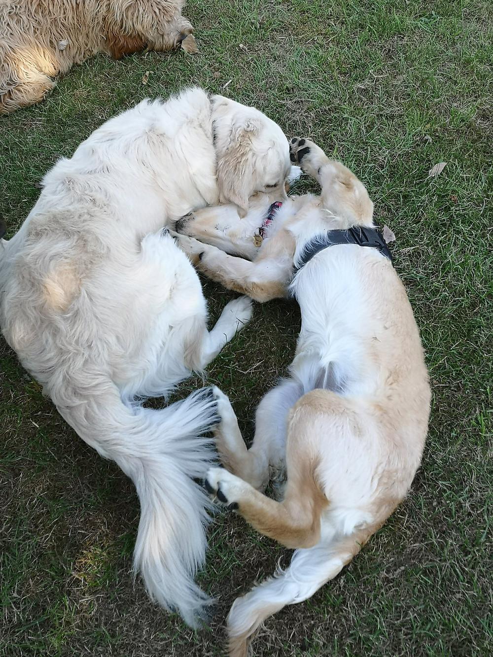 Good body language dogs playing