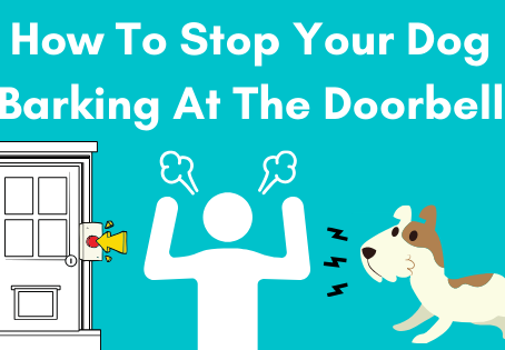 How To Stop Your Dog Barking At The Doorbell