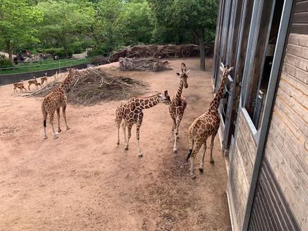 観光ー動物園