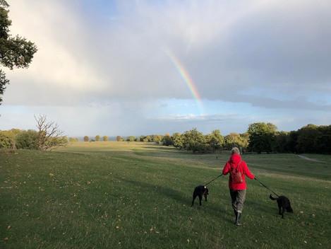 マザーと犬の散歩