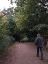 ホストファーザーと散歩