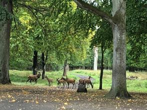 鹿がたくさんいる公園