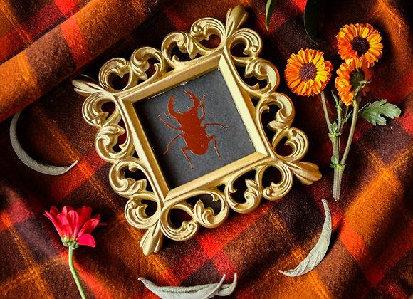 Fall Baby Beetle