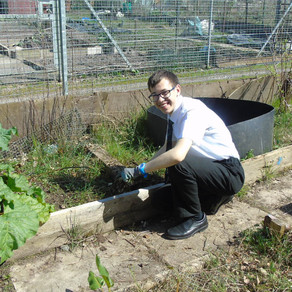 Staff and Students make Progress at Our Allotment