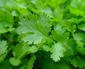 parsley-741996_1920.jpg
