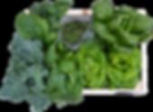 Variety box - lettuce, kale, basil, arugula, chard, spinach, mint, thyme, parsley, cilantro