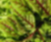 vegetables-557891_1920.jpg