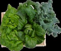 Basic box - lettuce, kale, basil