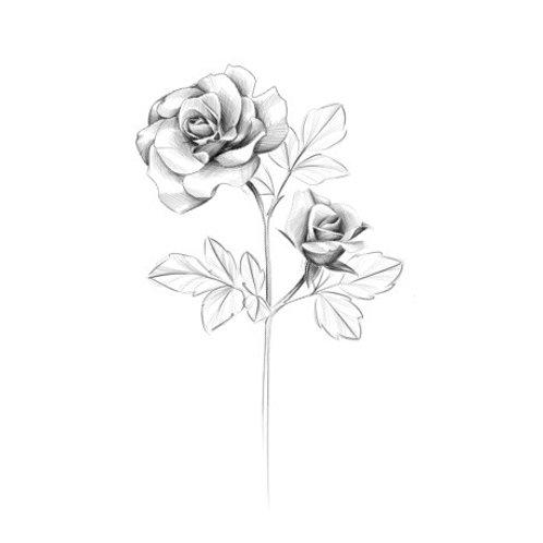 Rose Stem Temporary Tattoo