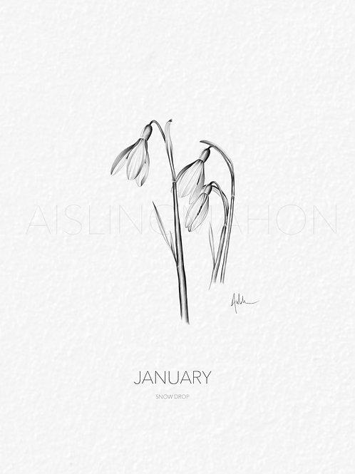 Birth Month Flower Prints