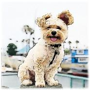 Dogs1blur.jpg