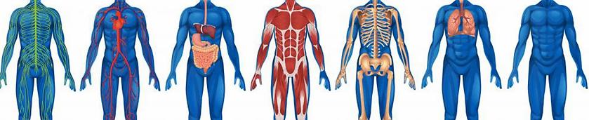 Anatomy-Physiology-1600x320.webp