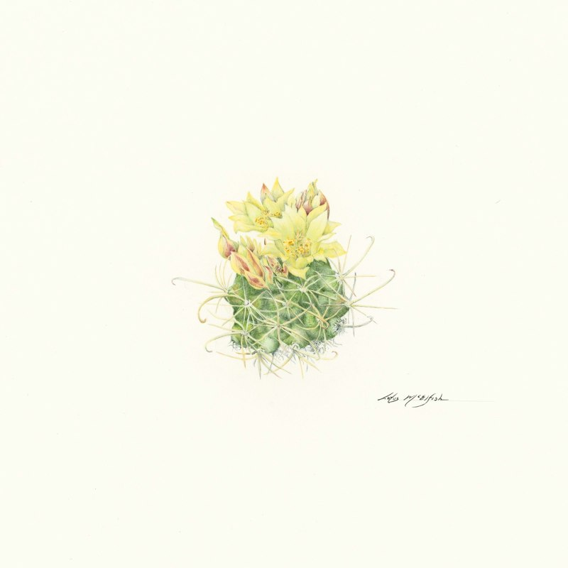 Endangered Tobusch Fishhook Cactus