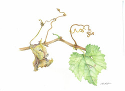 """Hanging On""- Grapevine"