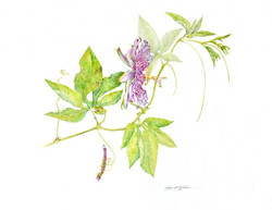 """""""Hanging On II"""" Passionflower"""