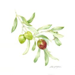 Olive Trio