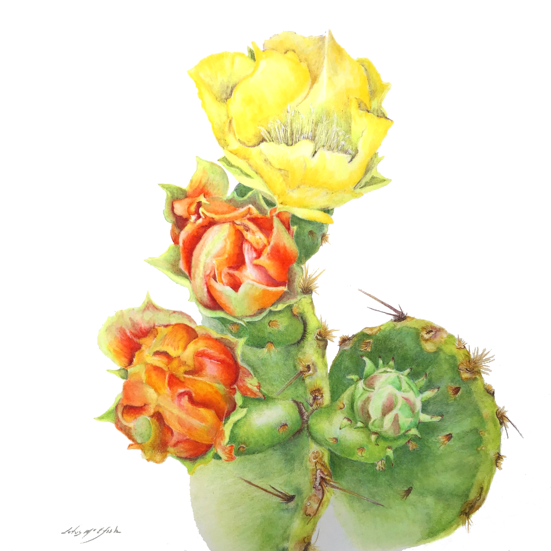 """Texas State Plant""-Prickly Pear"