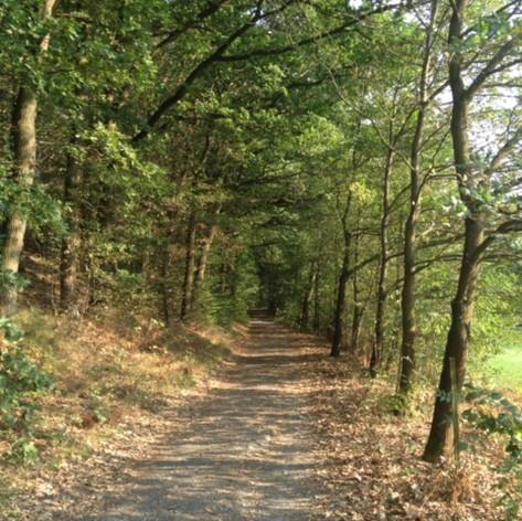 Waldweg Schweinmühle