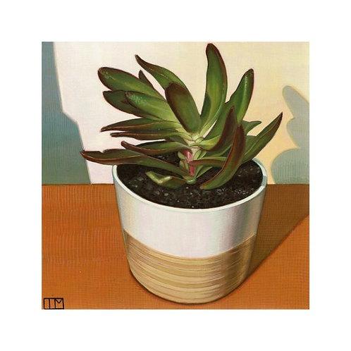 Growing Succulent Glicee Print