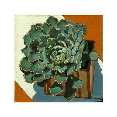 Cabbage Succulent Glicee Print
