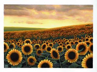 """""""Follow the Golden Sun"""""""