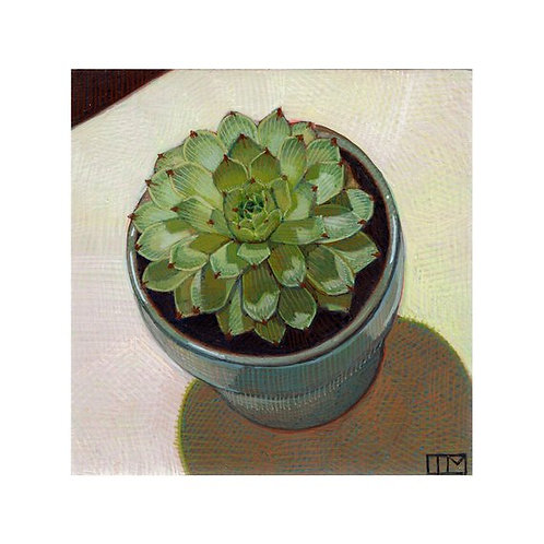 Flower Succulent Glicee Print