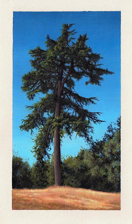 Lone Wolf Original Painting