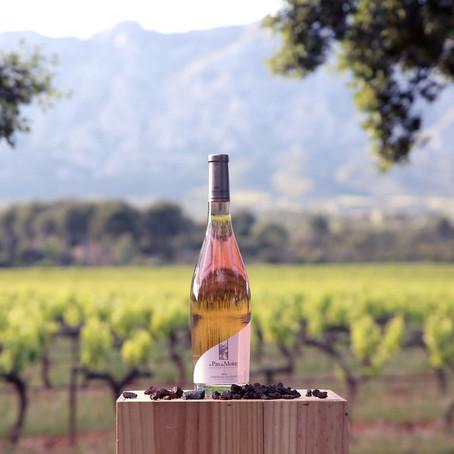 Lançamento e Vinhos especiais no Outubro Rosa da Inovini