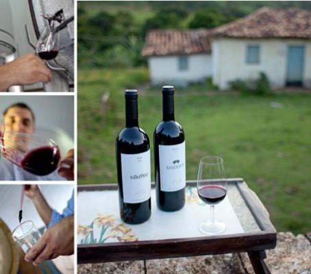 Cris Jardim entrevista Marcelo de Souza, produtor da Vinícola dos Pirineus