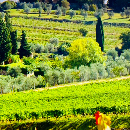 Vinho orgânico, biodinâmico e natural. Vamos entender sobre vinhos sustentáveis.