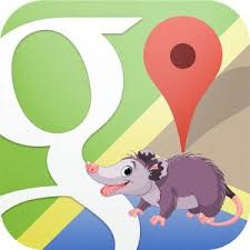 Image Showing a Possum on a Google background.