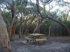 Activities_Bush-Camping-Fernery---Eumera