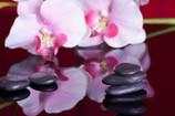 Salon la Fleur de Vie, 3ème édition