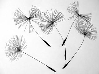 Salon la Fleur de Vie, 4ème édition